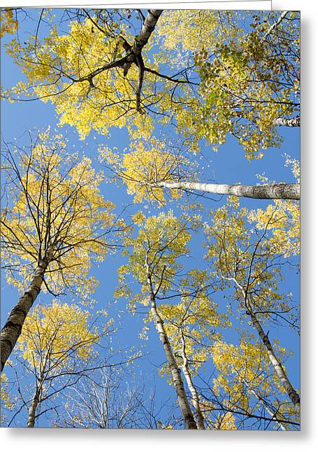 Reaching For The Sky 1 Greeting Card by Rob Huntley