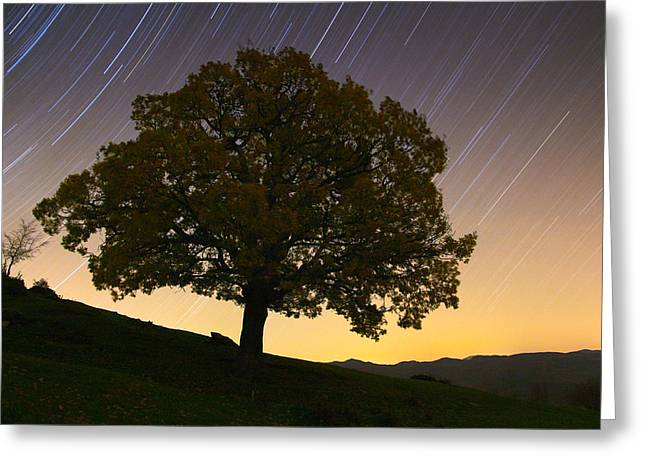 Reaching For The Stars Greeting Card by Boris Pophristov