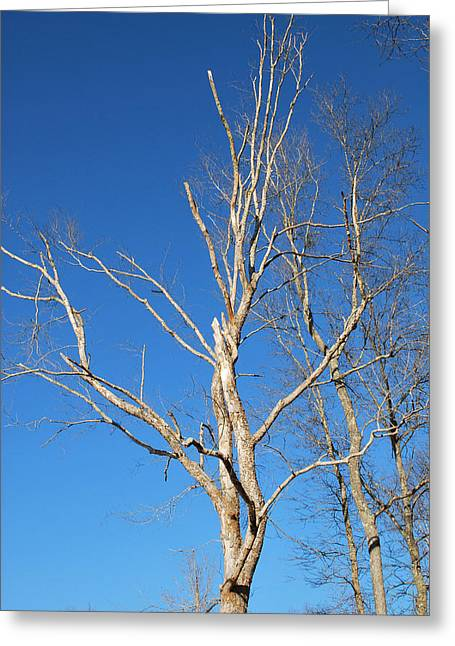 Reaching Out Greeting Card by Linda Segerson