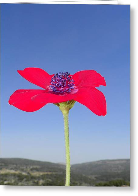 Reaching The Sky Greeting Card by Noreen HaCohen