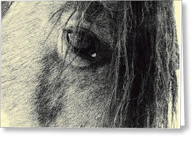Read My Eyes Greeting Card by Patricia Keller