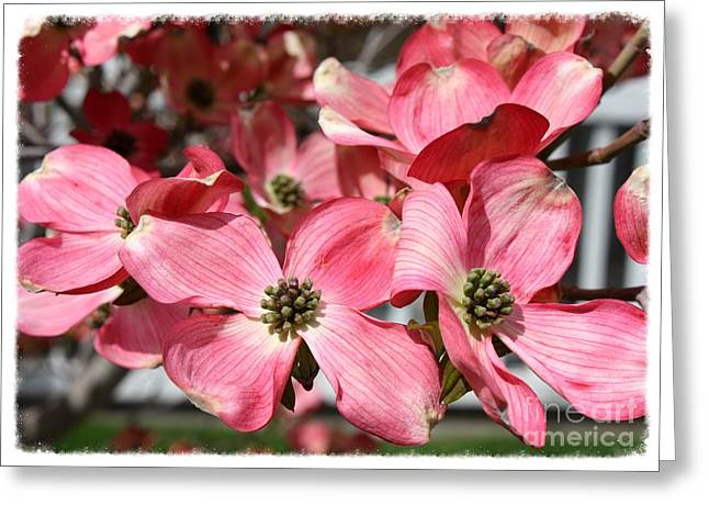 Ready For Spring Greeting Card by Carol Groenen