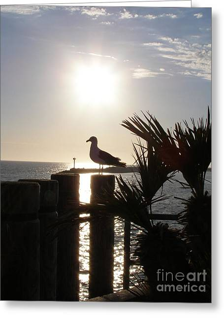 Ready For Sunset Greeting Card by Bev Conover