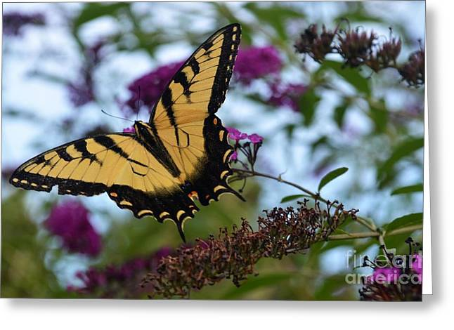 Greeting Card featuring the photograph Ready For Take Off by Judy Wolinsky