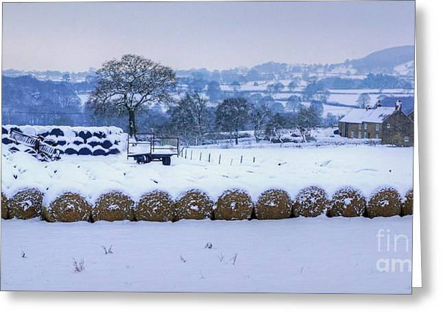 Ready For Winter Greeting Card by David Birchall