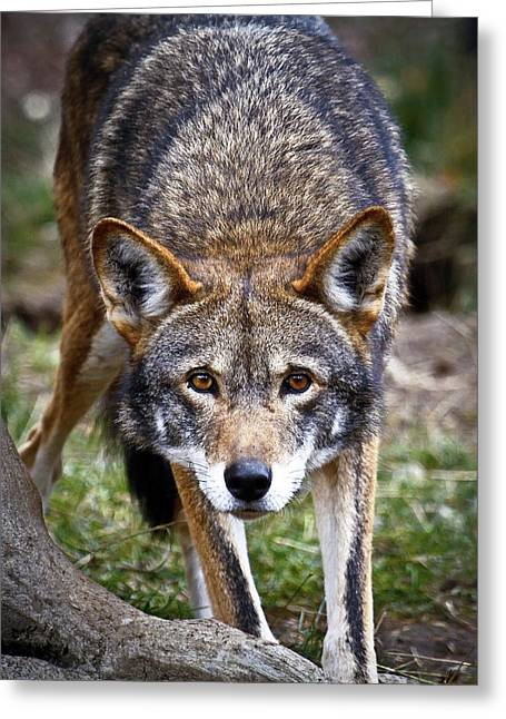 Ready To Attack Greeting Card by Steve McKinzie
