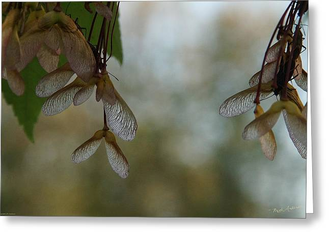 Ready To Fly Greeting Card by Mick Anderson