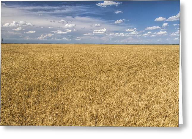 Greeting Card featuring the photograph Ready To Harvest by Rob Graham