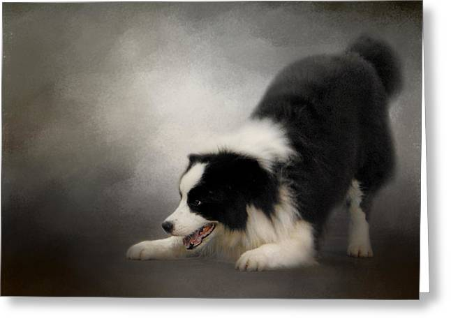 Ready To Play - Border Collie Greeting Card by Jai Johnson