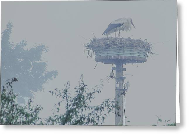 Really Foggy And Gray Day Greeting Card