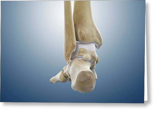 Rear Foot And Ankle Bones Greeting Card