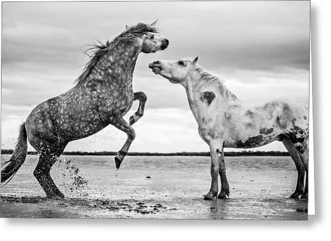Rearing Stallion I Greeting Card