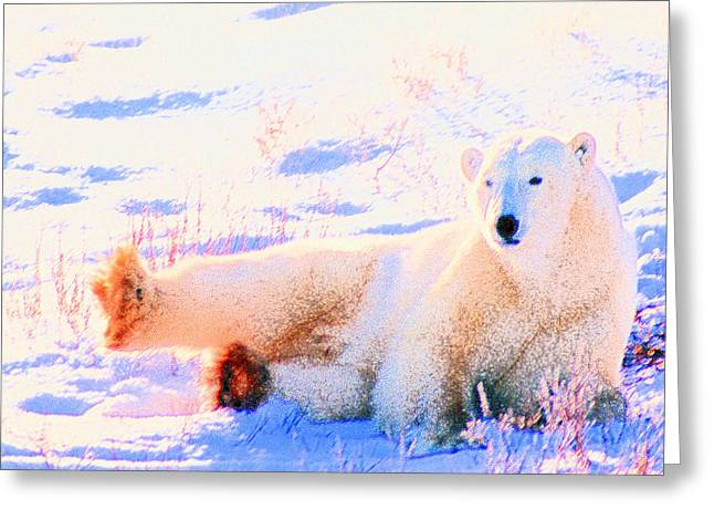 Reclining Polar Bear Greeting Card