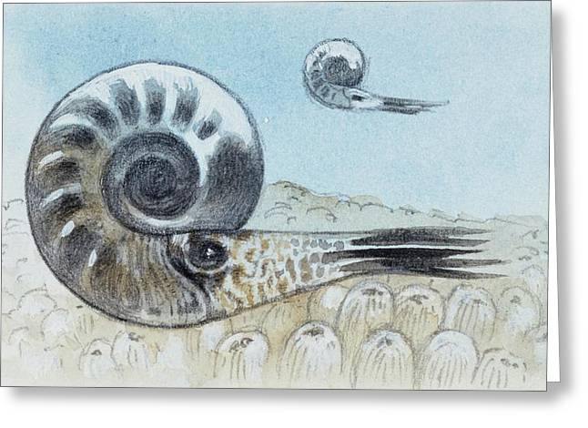 Reconstruction Of Ammonite Greeting Card