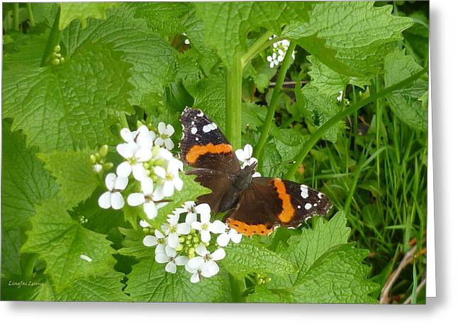 Greeting Card featuring the photograph Red Admiral Butterfly by Lingfai Leung