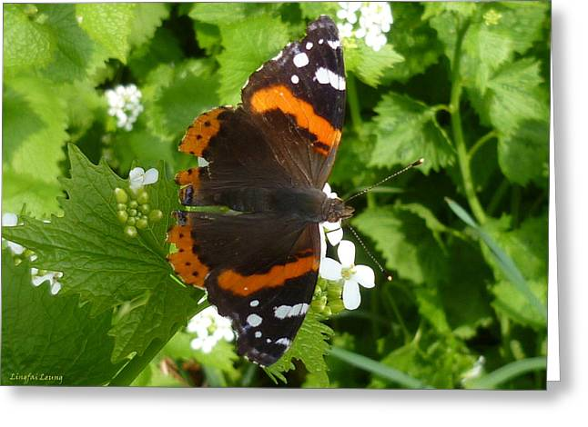 Greeting Card featuring the photograph Red Admiral In Toronto by Lingfai Leung