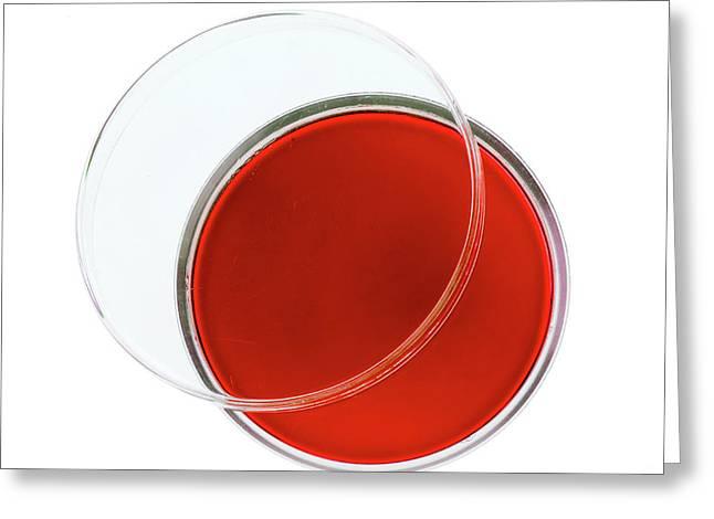 Red Agar Plate Greeting Card