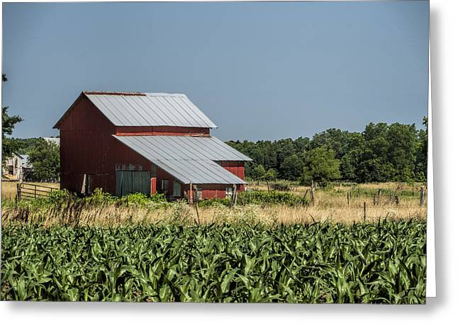 Red Amish Barn And Corn Fields Greeting Card by Kathy Clark