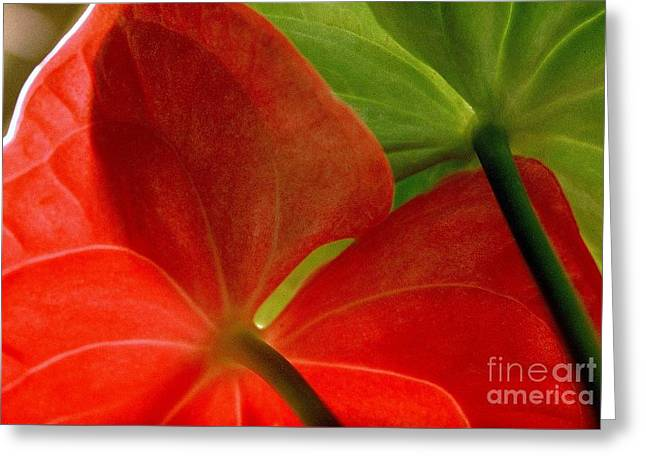 Red And Green Anthurium Greeting Card
