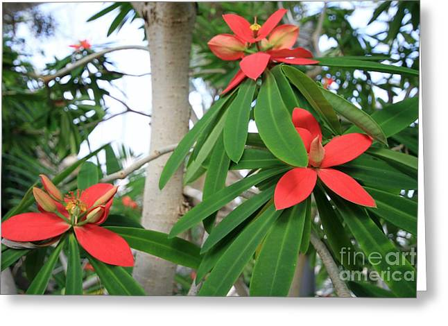 Red And Green Greeting Card by Butch Phillips