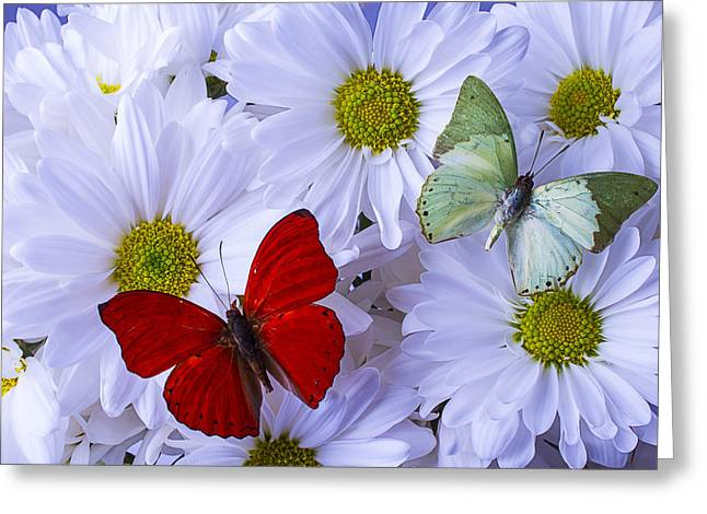 Red And Green Butterflies Greeting Card