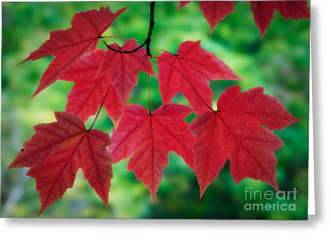 Red And Green Greeting Card by Inge Johnsson