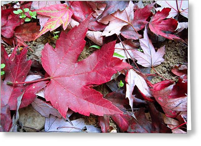 Red And Green Of Fall Greeting Card