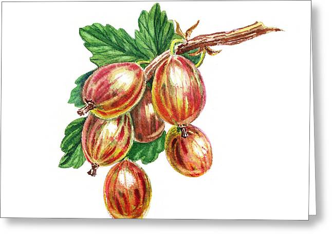 Red And Happy Gooseberries Greeting Card by Irina Sztukowski