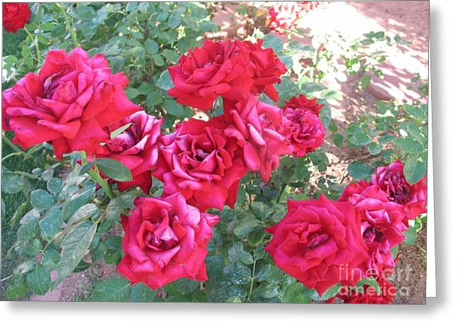 Greeting Card featuring the photograph Red And Pink Roses by Chrisann Ellis