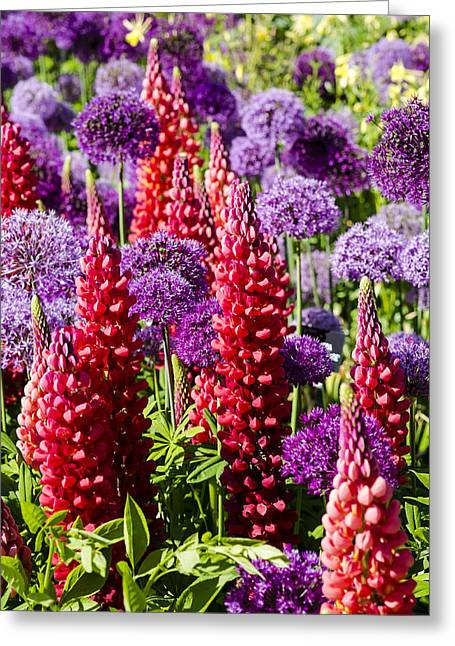 Red And Purple #1 Greeting Card by Gerry Walden