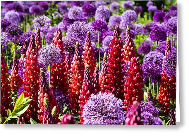 Red And Purple #2 Greeting Card by Gerry Walden