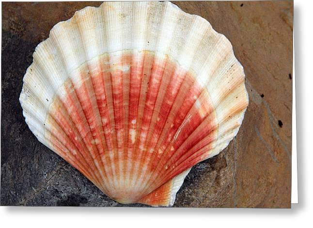 Red And White Seashell Greeting Card by Aidan Moran