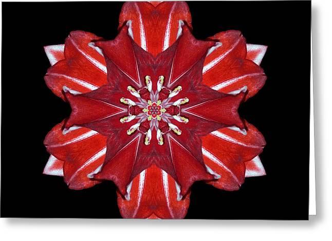 Red And White Amaryllis Vii Flower Mandala Greeting Card by David J Bookbinder
