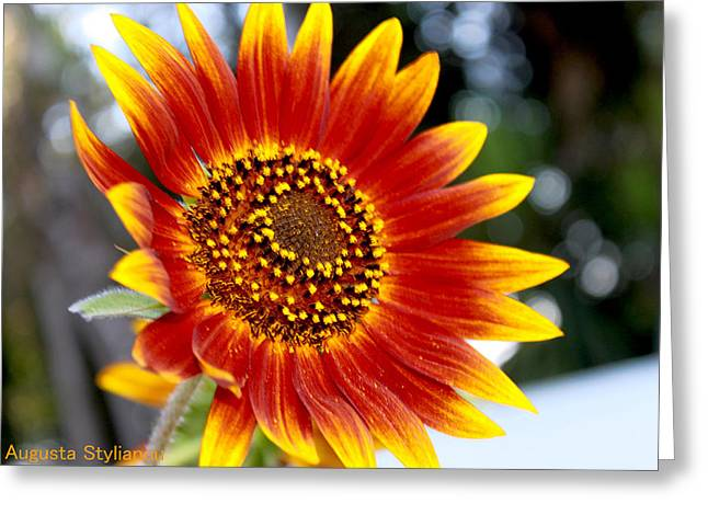 Red And Yellow Flower Greeting Card by Augusta Stylianou