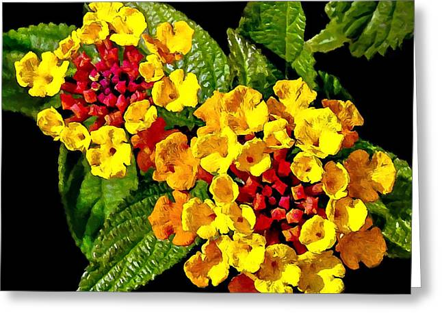Red And Yellow Lantana Flowers With Green Leaves Greeting Card by Bob and Nadine Johnston