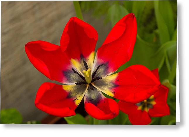 Red And Yellow Greeting Card by John Marszalek