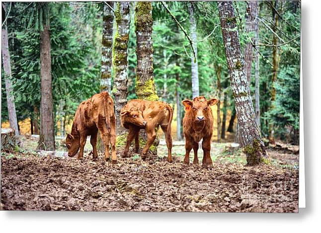 Greeting Card featuring the pyrography Red Angus Calves by Larry Campbell