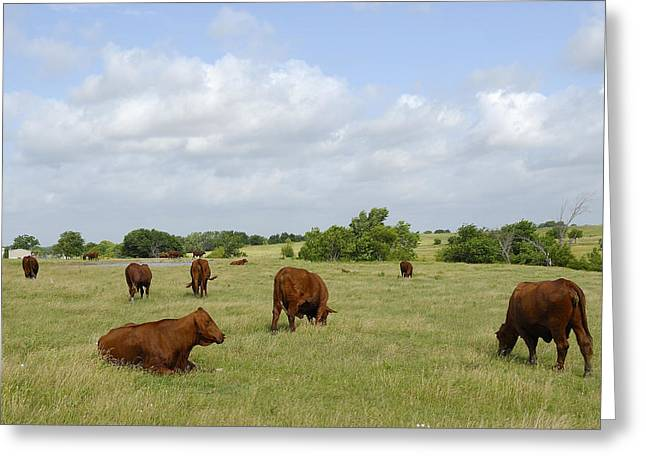 Greeting Card featuring the photograph Red Angus Cattle by Charles Beeler