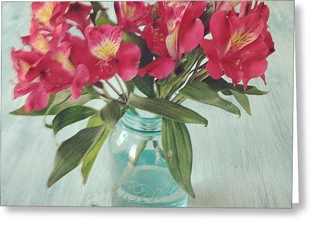 Red Astramaris Flowers Greeting Card by Kay Pickens