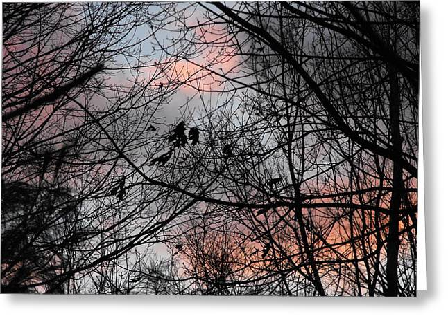 Red At Night Greeting Card by Penny Homontowski