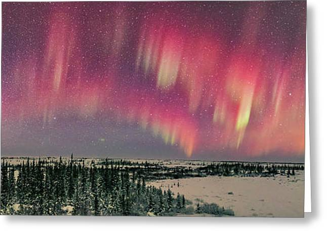 Red Aurora Panorama 2 Feb 12, 2016 Greeting Card by Alan Dyer