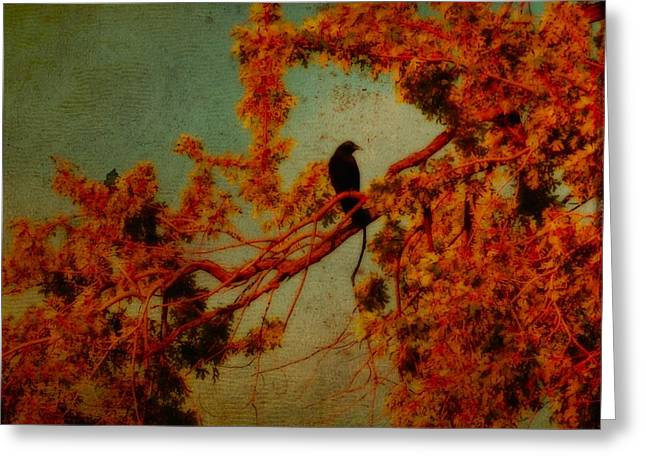 Red Autumn Greeting Card by Gothicrow Images