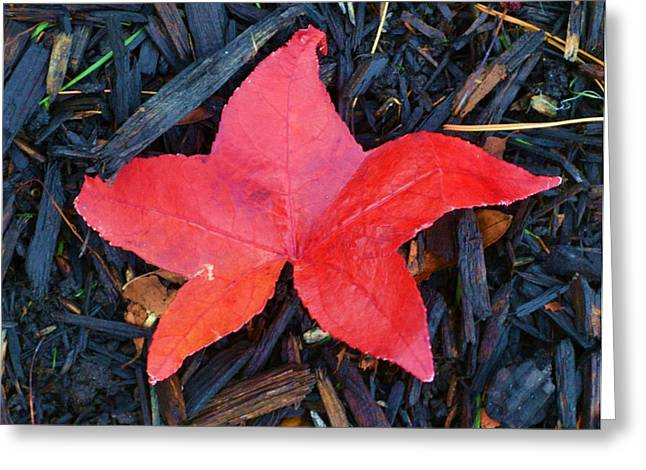 Red Autumn Leaf Greeting Card by P Dwain Morris