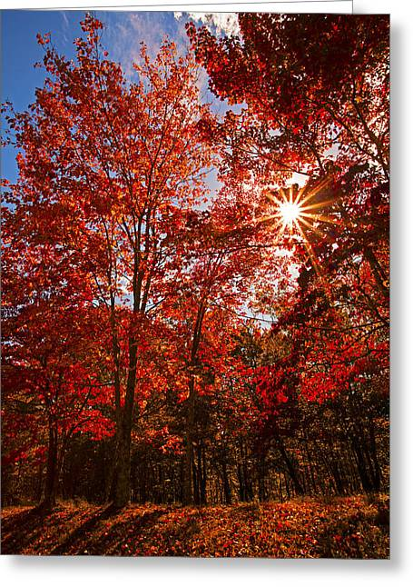 Greeting Card featuring the photograph Red Autumn Leaves by Jerry Cowart