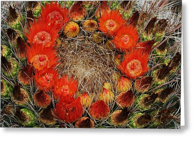 Greeting Card featuring the photograph Red Barell Cactus Flowers by Tom Janca
