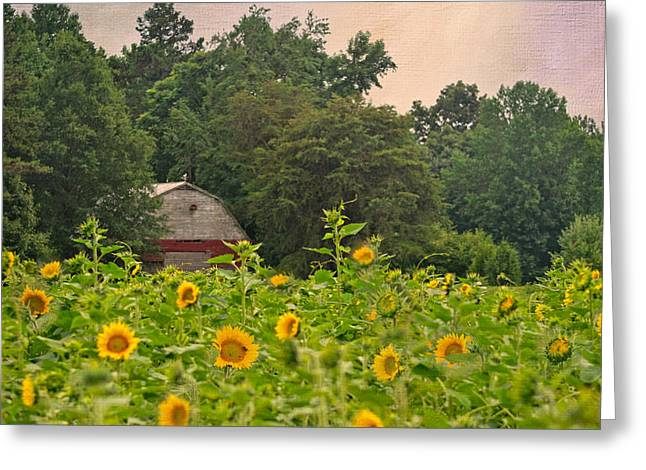 Red Barn Among The Sunflowers Greeting Card by Sandi OReilly