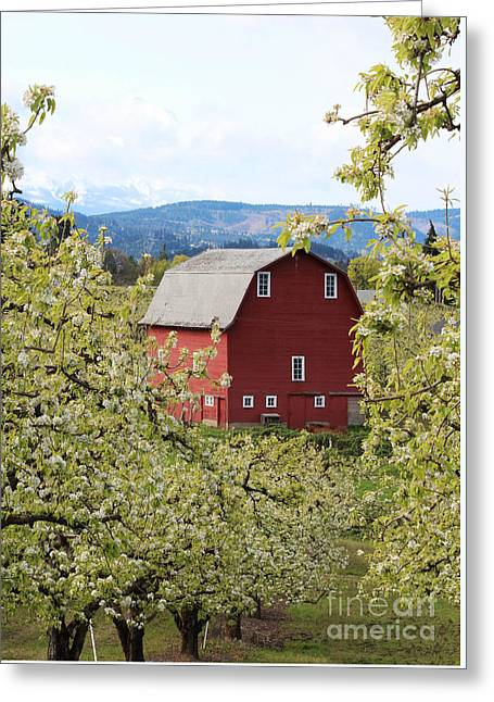 Greeting Card featuring the photograph Red Barn And Apple Blossoms by Patricia Babbitt