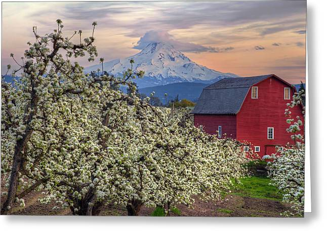 Red Barn In Hood River Pear Orchard Greeting Card