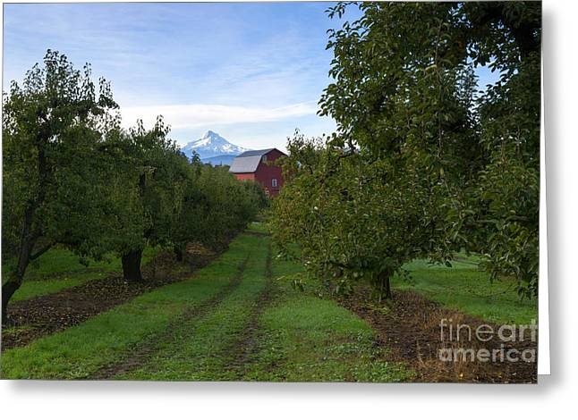 Red Barn Mountain Greeting Card by Mike Dawson