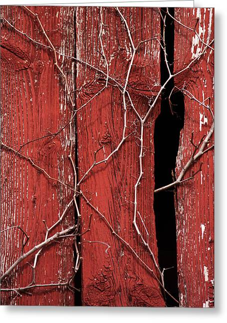 Red Barn Wood With Dried Vines Greeting Card by Rebecca Sherman